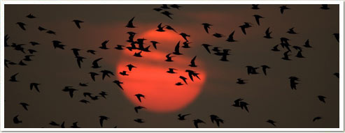 shawn-carey-terns-sunset